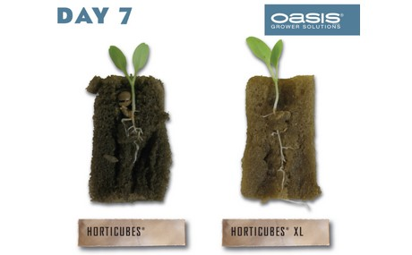 Oasis Presents New Hydroponic Seed Propagation Medium