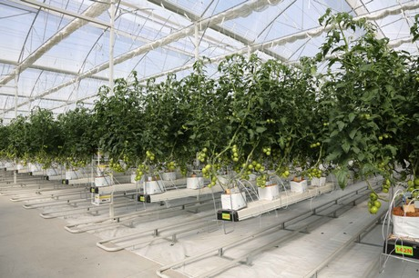 Mexico: Filclair sees more growers going high-tech and ...