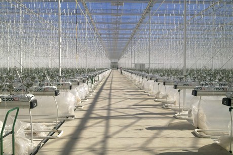 Turkey 3 8 Hectare Ultra Clima Greenhouse Heated By