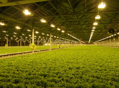 Quot 900 Crops Of Lettuce Per Square Meter And Only 4