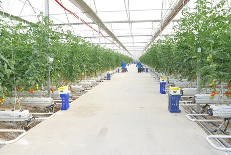 Turkey Nassan Greenhouses Builds 18 5 Hectare For Surel