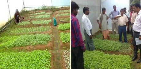 diseases of vegetable crops in india pdf