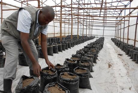 Uganda: Greenhouse gives veg grower better yields, more cash
