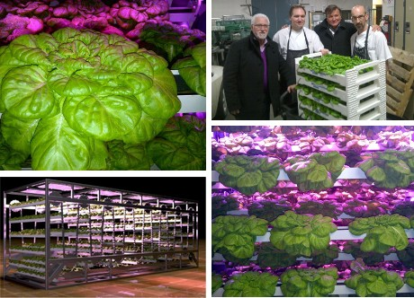 canada urban barns plans to grow year round produce in newfoundland