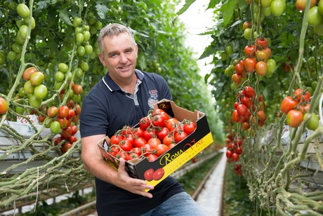 Netherlands 16 Hectare Plum Tomato Grower Opts For