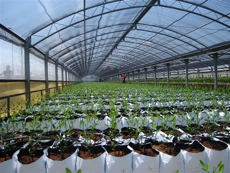 Coco Coir Ideal Substrate To Propagate Citrus Trees In Greenhouse