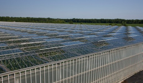 When will the US greenhouse vegetable market become saturated?