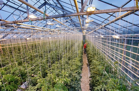 Tomato Farmers Worried About Giant Greenhouse In Iceland