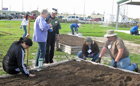 Us Tx Applications Being Accepted For Spring Bexar County Master Gardener Intern Training