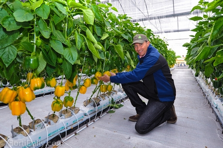 Mexican greenhouse grower David Hernandez is forward thinking