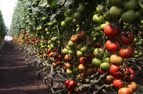First Ethiopian greenhouse grower to exhibit at Fruit