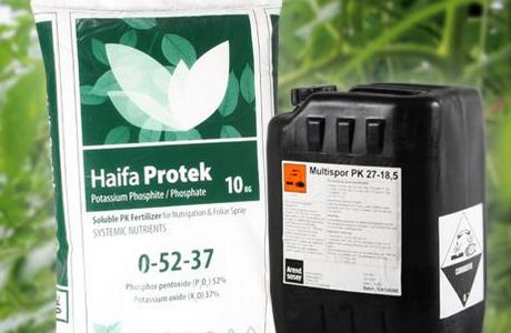 Lower pest and disease levels by using Potassium Phosphite