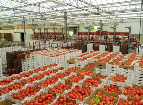 Moderate growth prevents rapid explosion of US greenhouse