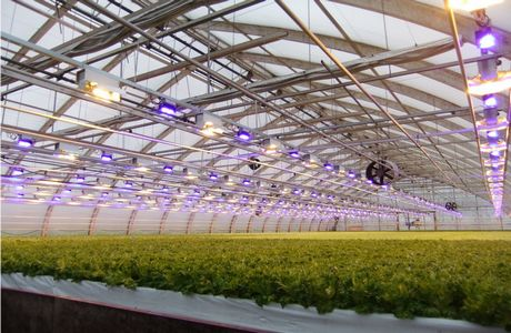 Netled releases new booster lighting technology taking full use of new lighting method together with partners for a year now also from the beginning of the year 2014 there has been a search for commercial greenhouses mozeypictures Gallery