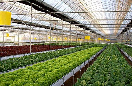 Largest Organic Hydroponic Greenhouse Facility In Florida