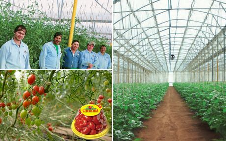 Mexico: NatureSweet and Ganfer announce partnership