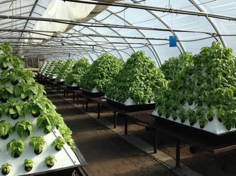 Greenhouse Growing Vancouver Island