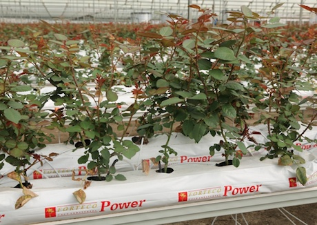 Kenya: Payback time hydroponic cultivation system for ...