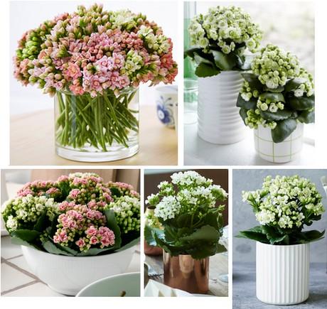 bloem en plant tijdschriften