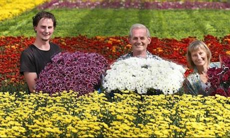 Australia Chrysco Flowers To Return To Melbourne