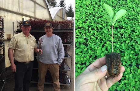 Ellepots Enable Helios Nursery To Grow More Elite Rootstocks And Grafted Fruit Trees Faster
