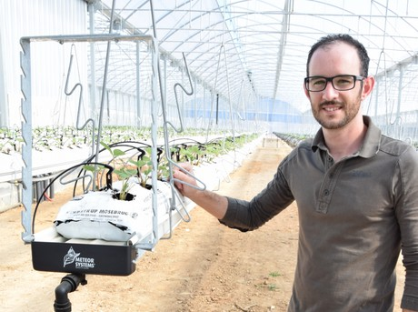 Without Background In Horticulture Young Entrepreneur Starts His Own 1 3 Ha Strawberry Greenhouse