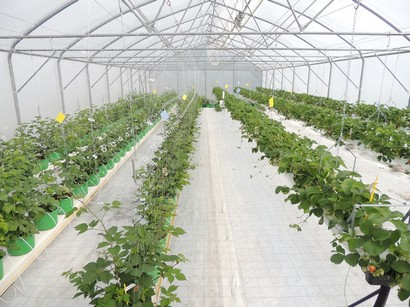 Hungary New Training Centre To Develop Hydroponics In