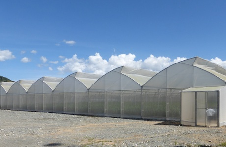 Greenhouses for tropical climate