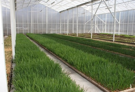 Latvia: Large vegetable farm and propagation greenhouse for sale on green lavender, green beets, green bonsai, green bushes, green perennial, green garden design, green flowers, green tulips, green nature, green gardening, green shrubs, green butternut squash,