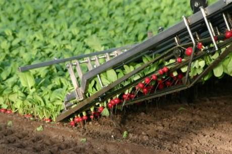 Nl yilmaz radijs acquires 10ha greenhouse