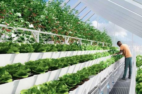 Us Ny Aquaponic Startup Edenworks Hosts Rooftop Harvest
