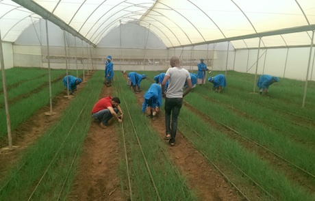 open field tomato farming in kenya Tomato farming guide tomato farming in kenya applications open for on considerations for starting greenhouse farming in kenya eric k (farming afrika.