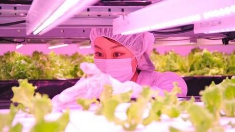 Japan: Osaka Prefecture University creates innovative indoor farming