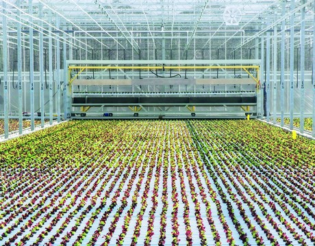 Canada: Mucci Farms invests in large scale, fully automated ... on small garden greenhouse, small greenhouse plans, small greenhouse frame, small propagation greenhouse, small greenhouse supplies, small solar greenhouse, small greenhouse foundation, small winter greenhouse, small metal greenhouse, small cannabis greenhouse, small indoor greenhouse, small farm greenhouse, small hoop greenhouse, small container greenhouse, small hobby greenhouse, small portable greenhouses, small greenhouse heating, small mushroom greenhouse, small plant greenhouse, small pvc greenhouse,
