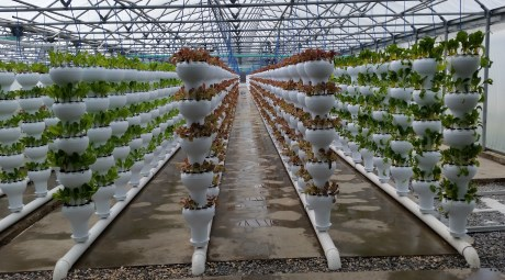 Hortidaily Com Foody Introduces Economically Priced