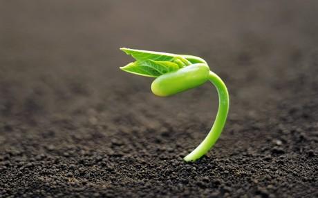 Kenya: Amiran Hybrid Seeds