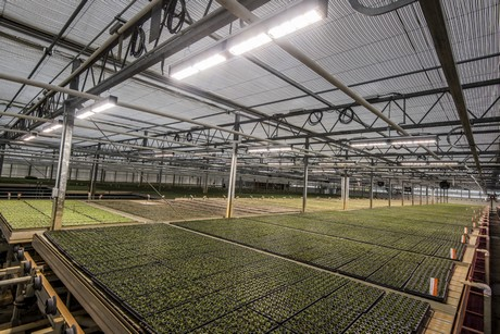 New led based horticulture lighting systems