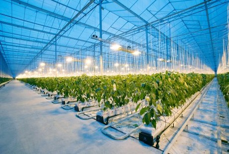 general plant knowledge