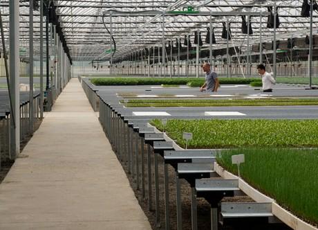 Kenya: High tech vegetable propagation nursery for Naivasha
