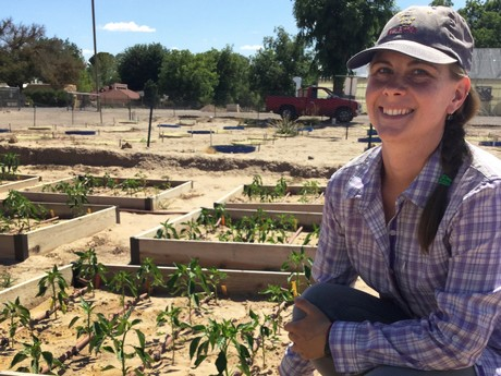NMSU graduate student tests organic chile fertility