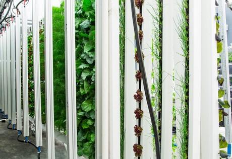 CoolBar: A smart solution for vertical farm lighting