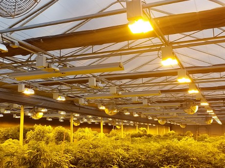 The Most Common Misconceptions About Growing Cannabis In