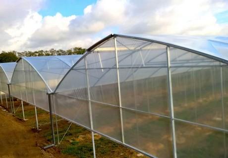 Francia Buratti Comincia La Coltivazione Di Kiwi In Serra