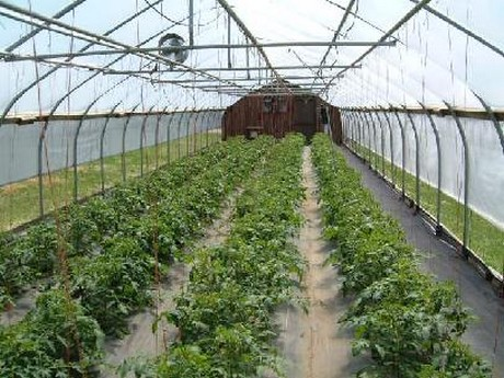 Us Nh Proposed Greenhouse Would Bring 80 Jobs To Berlin