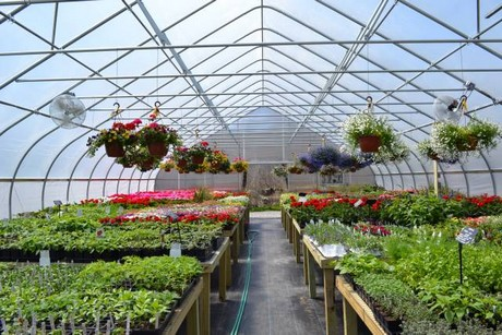 available in 30 and 34 widths the noreaster is built to be strong bows are 190 13 ga galvanized steel tubing and there is a truss assembly with - Rimol Greenhouse Of Photos