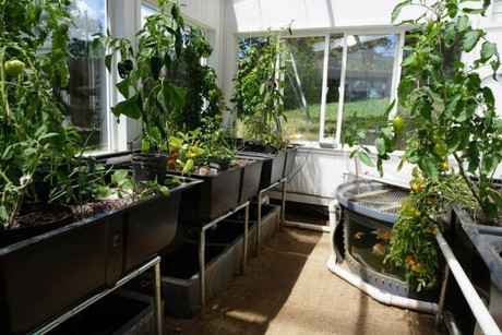 Can a commercial aquaponics greenhouse be profitable?