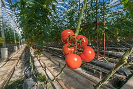 HortiDaily com : US: Virginia growers get ahead of spring thanks to
