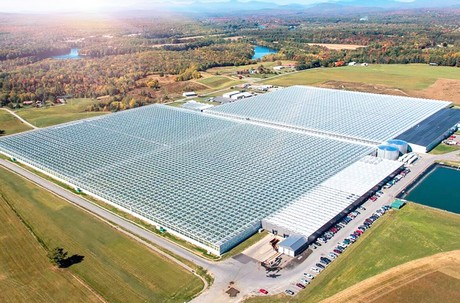 Mastronardi Produce Purchases New England Grower Backyard Farms