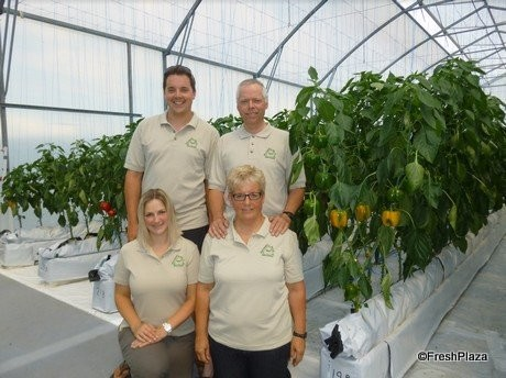 New Zealand grower combines greenhouse peppers with feijoa crops