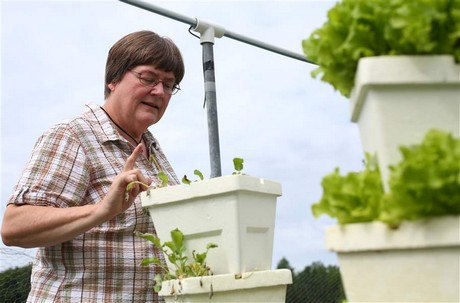Hortidaily global greenhouse news for Indoor gardening for seniors